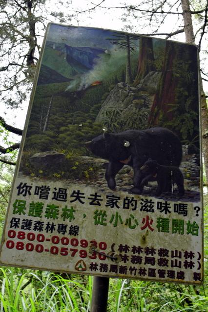 大鹿林道西線 (13).JPG - 觀霧國家森林遊樂區-大鹿林道西線,榛山森林浴步道
