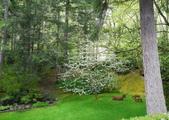維多利亞布查花園:維多利亞布查花園_1000420_0510 881.jpg