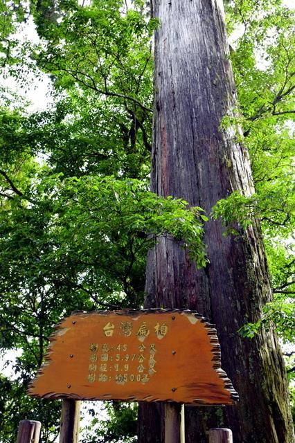 大鹿林道西線 (5).JPG - 觀霧國家森林遊樂區-大鹿林道西線,榛山森林浴步道