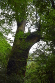 拉拉山國有林自然保護區:_DSC0336.JPG