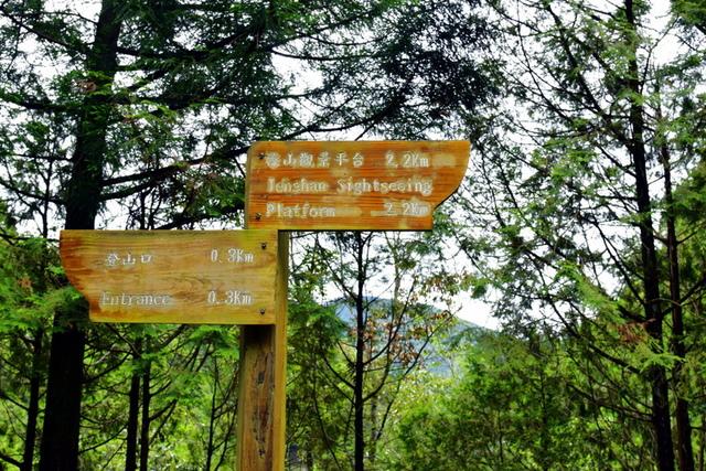 榛山森林浴步道 (9).JPG - 觀霧國家森林遊樂區-大鹿林道西線,榛山森林浴步道