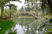 溪頭自然教育園區:_DSC0060.JPG