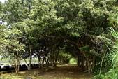 林田山林業文化園區,大農大富平地森林園區 :DSC_5224.JPG
