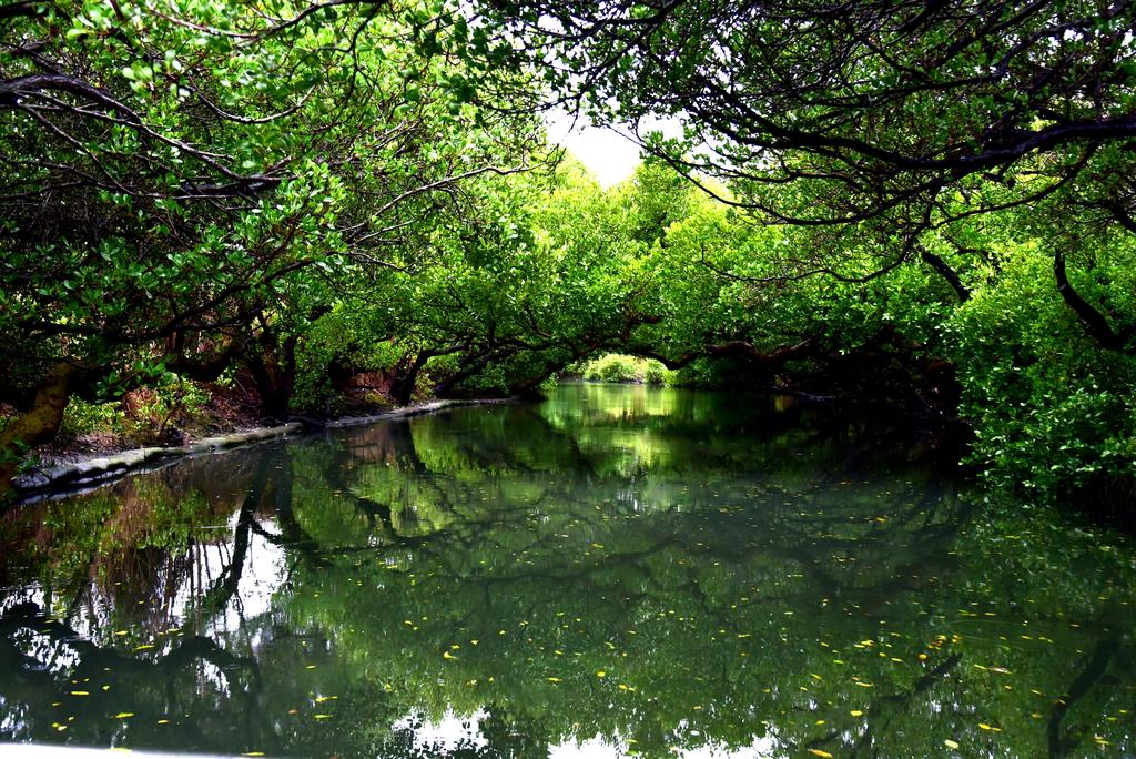 四草紅樹林綠色隧道 (19).JPG - 四草綠色隧道,陸軍特戰指揮部-武漢營區