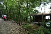 司馬庫斯巨木步道:DSC_6252.JPG