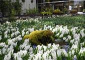 維多利亞布查花園:維多利亞布查花園_1000420_0510 886.jpg
