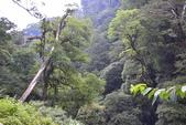 拉拉山國有林自然保護區:_DSC0346.JPG