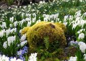 維多利亞布查花園:維多利亞布查花園_1000420_0510 887.jpg