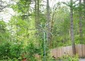 維多利亞布查花園:維多利亞布查花園_1000420_0510 889.jpg
