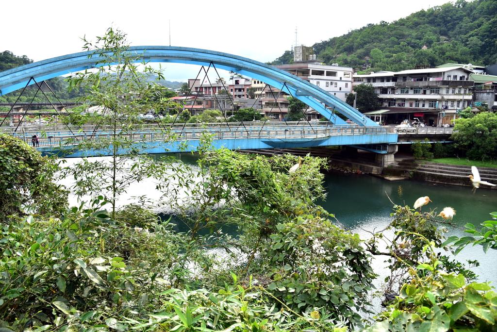 DSC_5765.JPG - 坪林拱橋牛背鷺,夜鷺觀賞區