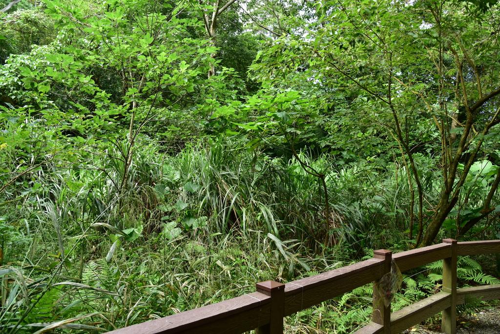 富陽自然生態公園 (17).JPG - 富陽自然生態公園