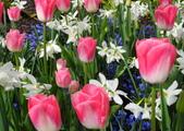維多利亞布查花園:維多利亞布查花園_1000420_0510 891.jpg