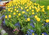 維多利亞布查花園:維多利亞布查花園_1000420_0510 892.jpg