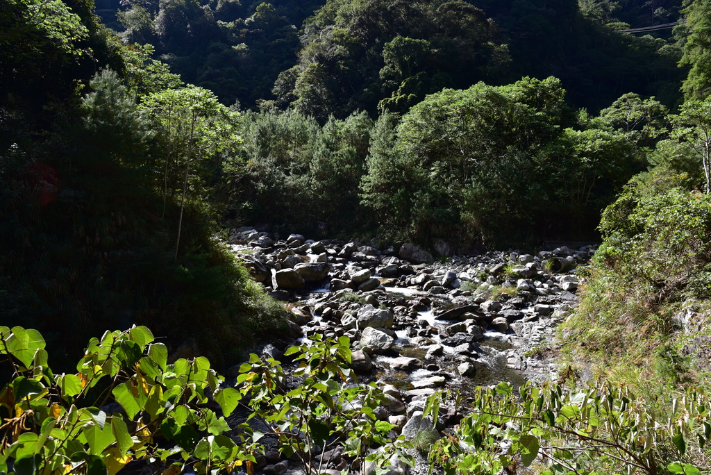 八仙山國家森林遊樂區 (26).JPG - 八仙山國家森林遊樂區