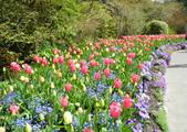 維多利亞布查花園:維多利亞布查花園_1000420_0510 897.jpg