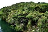 坪林拱橋牛背鷺,夜鷺觀賞區:DSC_5763.JPG