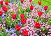 維多利亞布查花園:維多利亞布查花園_1000420_0510 901.jpg
