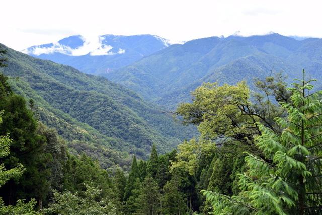 大鹿林道西線 (16).JPG - 觀霧國家森林遊樂區-大鹿林道西線,榛山森林浴步道