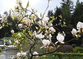 維多利亞布查花園:維多利亞布查花園_1000420_0510 902.jpg