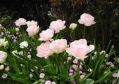 維多利亞布查花園:維多利亞布查花園_1000420_0510 904.jpg