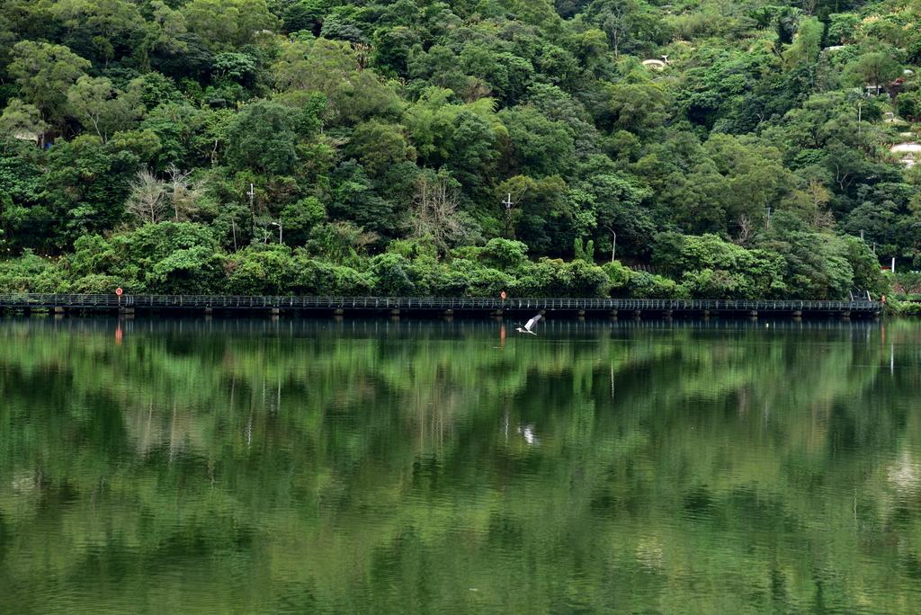 龍潭湖:DSC_2867.JPG
