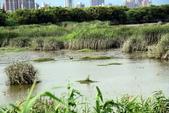 淡水河,新店溪右岸自行車道:DSC_3749.JPG