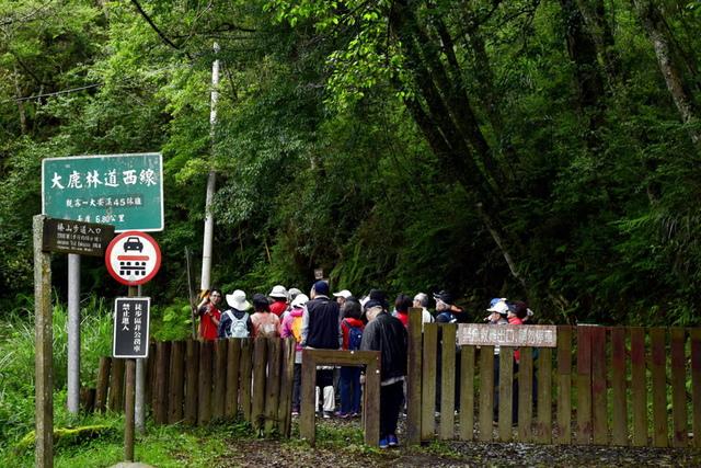 大鹿林道西線 (12).JPG - 觀霧國家森林遊樂區-大鹿林道西線,榛山森林浴步道