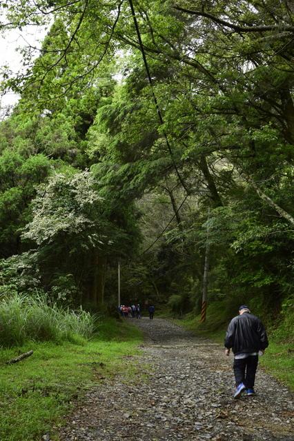 大鹿林道西線 (14).JPG - 觀霧國家森林遊樂區-大鹿林道西線,榛山森林浴步道