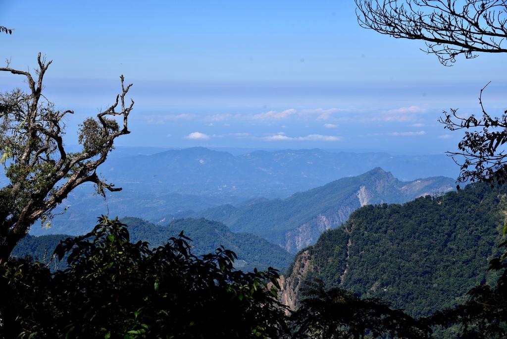 大雪山國家森林遊樂區 (3).JPG - 大雪山國家森林遊樂區
