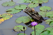 哭泣湖畔自然生態園區:DSC_0276.JPG