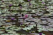 哭泣湖畔自然生態園區:DSC_0278.JPG
