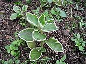 台大蔬果生態體驗半日遊20081214:IMG_1937.JPG
