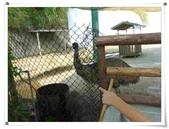 金雞蛋農場校外教學:IMGP0215.jpg