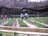 228苗栗老宫道露營採草莓:21個月大的照片 034.jpg
