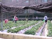 228苗栗老宫道露營採草莓:21個月大的照片 035.jpg