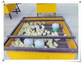金雞蛋農場校外教學:IMGP0209.jpg