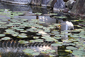 11.30 五結甕仔雞.仁山植物園:IMG_3233.jpg