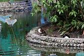 10.13植物園:IMG_0955.jpg