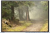 太平山之旅-山毛櫸國家步道:IMG_1669.jpg