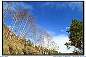 太平山之旅-山毛櫸國家步道:IMG_1644.jpg