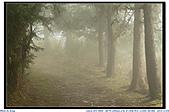 太平山之旅-山毛櫸國家步道:IMG_1675.jpg