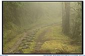 太平山之旅-山毛櫸國家步道:IMG_1689.jpg