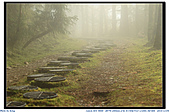太平山之旅-山毛櫸國家步道:IMG_1690.jpg