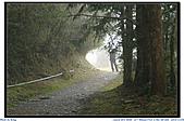 太平山之旅-山毛櫸國家步道:IMG_1656.jpg