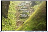 太平山之旅-山毛櫸國家步道:IMG_1704.jpg