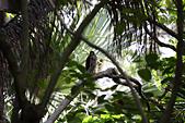 10.13植物園:IMG_0981.jpg