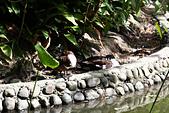 10.13植物園:IMG_0957.jpg