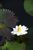 11.30 五結甕仔雞.仁山植物園:IMG_3243.jpg