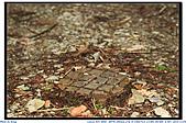 太平山之旅-山毛櫸國家步道:IMG_1662.jpg