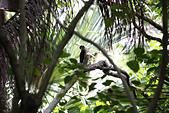 10.13植物園:IMG_0984.jpg